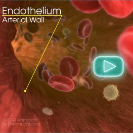 Red Blood Cell Animation - 3D CGI Medical Animation